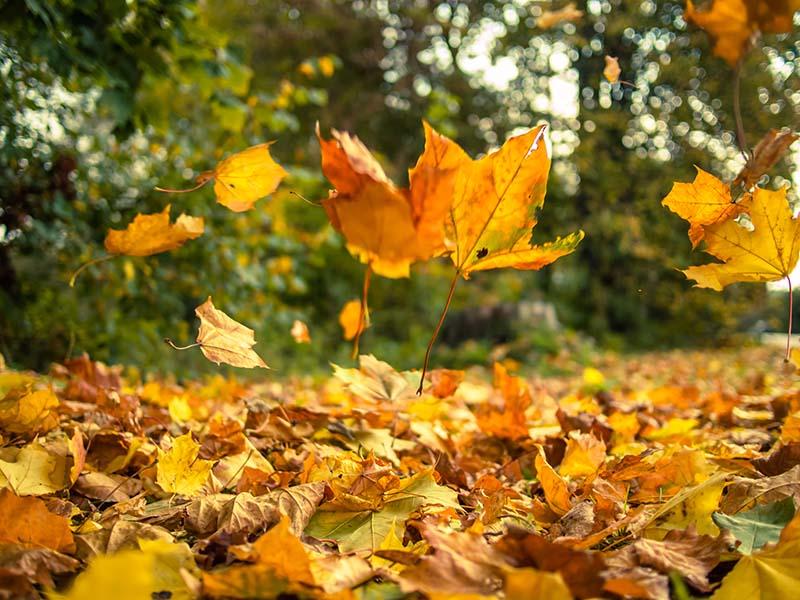 falling leaves Y4G2PW5